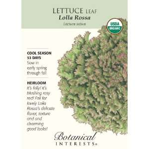 Botanical Interest   Lettuce Leaf Lolla Rossa (Certified