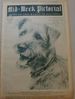 American Beauty 1928 Westminster Kennel Club Reject   Mutt Mongrel Dog