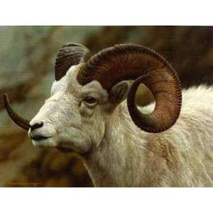Carl Brenders   Dall Sheep Portrait Artists Proof: Home