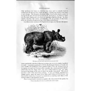 NATURAL HISTORY 1894 SUMATRAN RHINOCEROS WILD ANIMAL