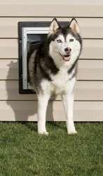 New PPA11 10916 PetSafe Wall Entry Dog Door Medium