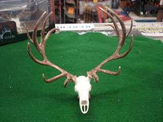 Big Rack Elk Skull & Rack Ornament BRAND NEW
