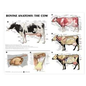 Bovine Anatomy Chart Cow:  Industrial & Scientific