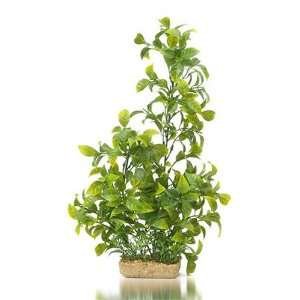 Imports Vibrant Green Ludwiga with Mini Green Stonewart, Extra Large