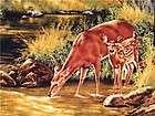 New Deer Animal Wild Wildlife Buck Doe Trees Forest Woo